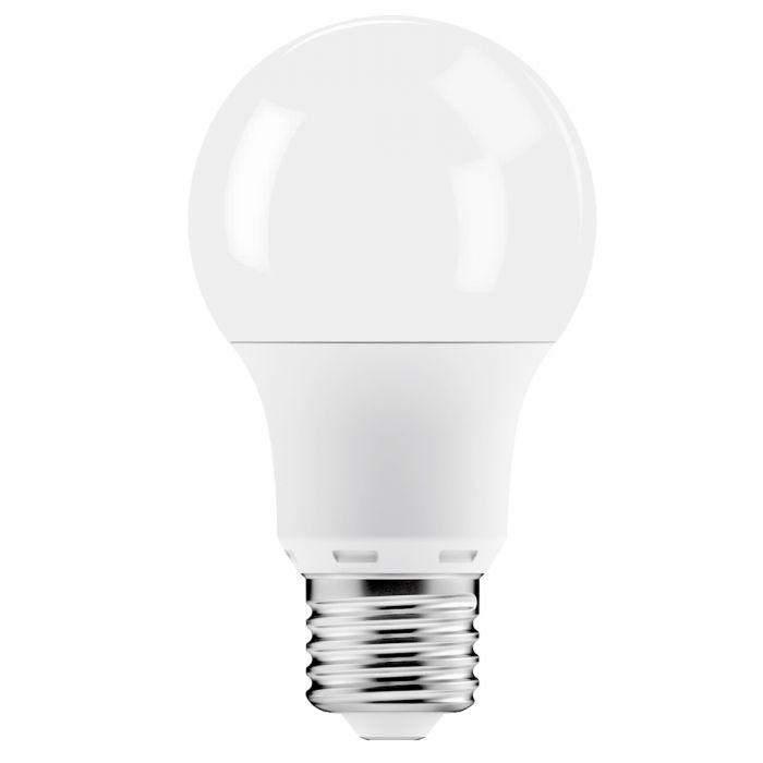 a lamp light bulbs